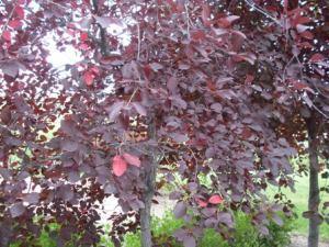 Fall 03