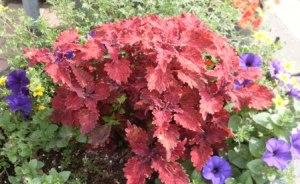 Fall Colours 02