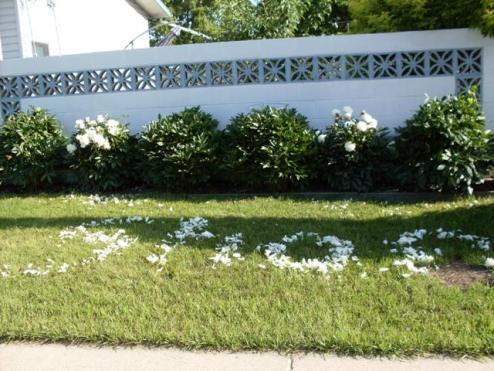 Flower Writing
