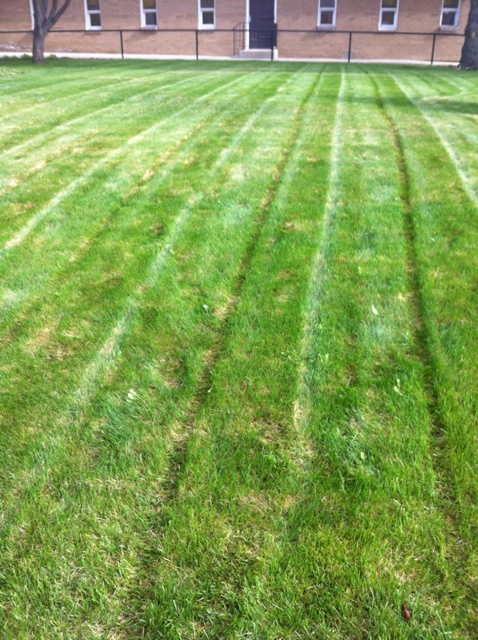 Freshly Mowed