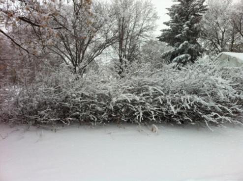 Hoar Frost 2012