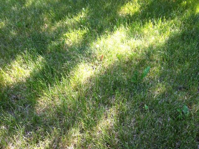 Yard Smells Like Dog Poop