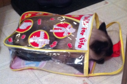 Cat hiding in bag!